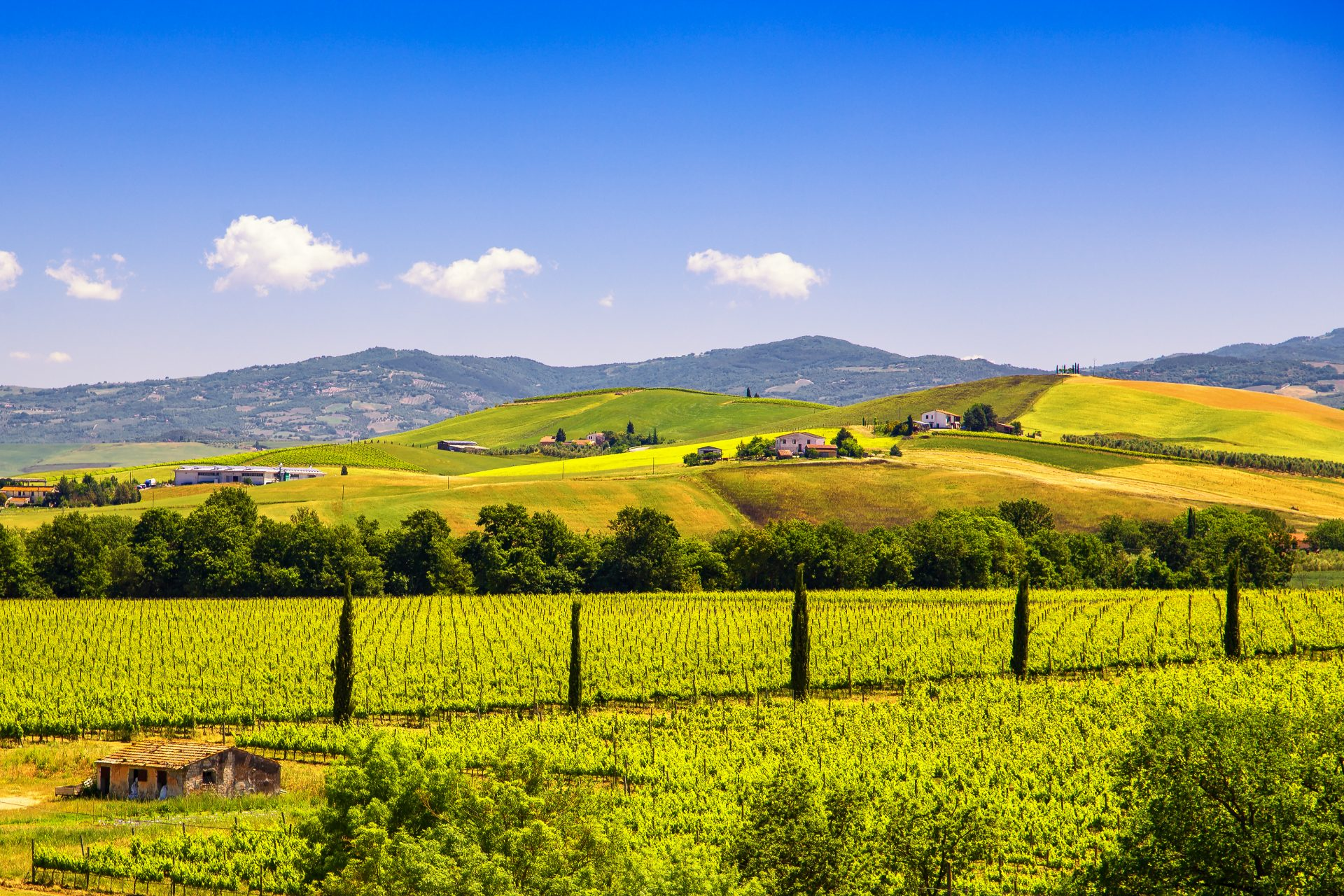 De heuvels bij Montalcino